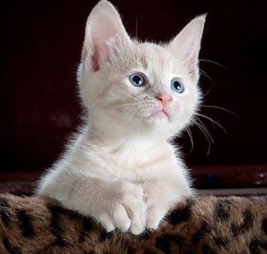 kitty-551554__340
